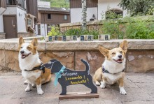 Yappy Hour at The Sebastian - Vail